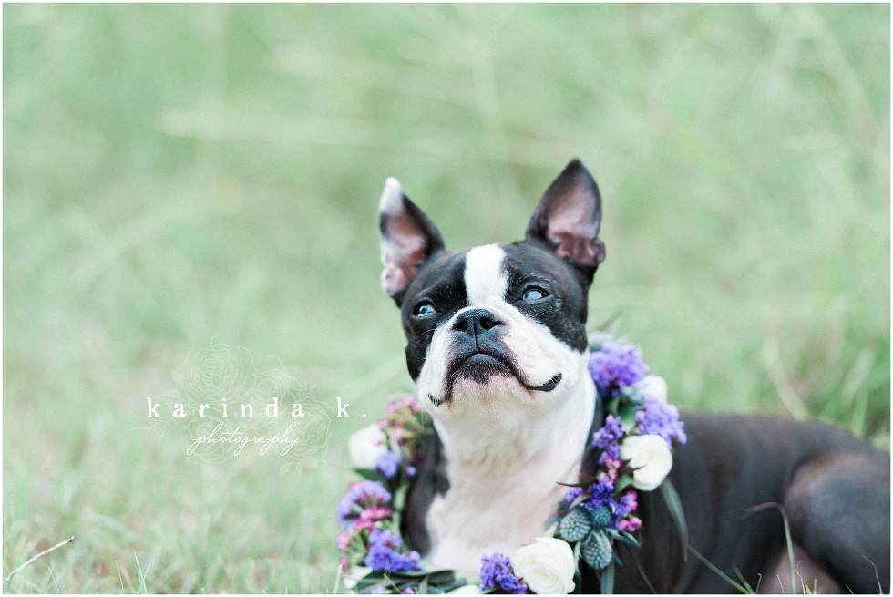 Dog Florals Striking Stems Houston Wedding Florist